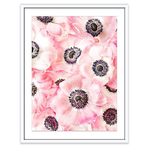 Anemones, Amy Neunsinger
