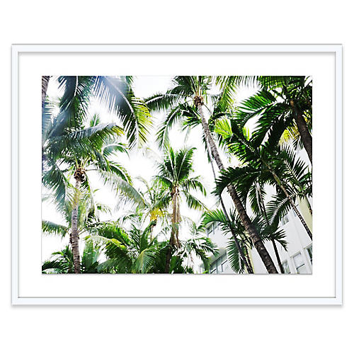 Natalie Obradovich, Miami Palms