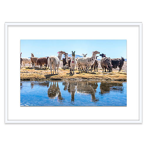 Richard Silver, Llamas by the Pond, Uyuni