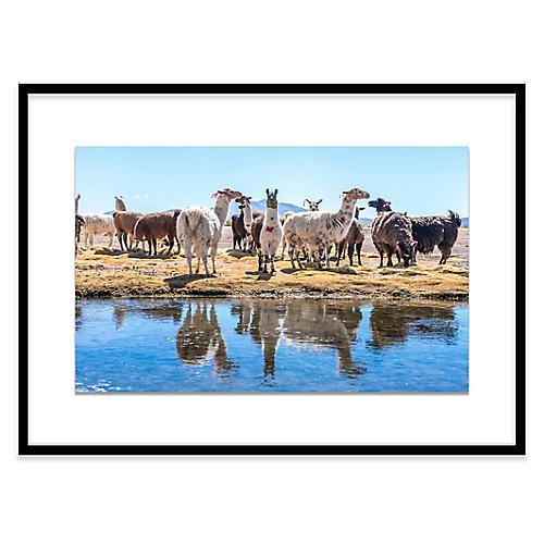 Llamas by the Pond, Uyuni, Richard Silver