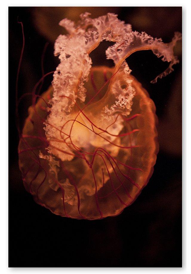 Steve Gorman, Jellyfish XXVI