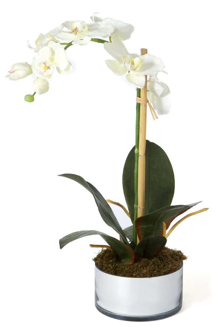 "19"" Phalaenopsis in Planter, Faux"