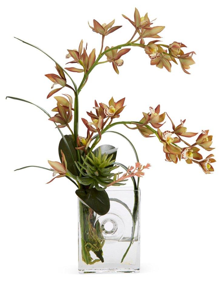 """23"""" Orchids w/ Succulent in DNU Dsic"""