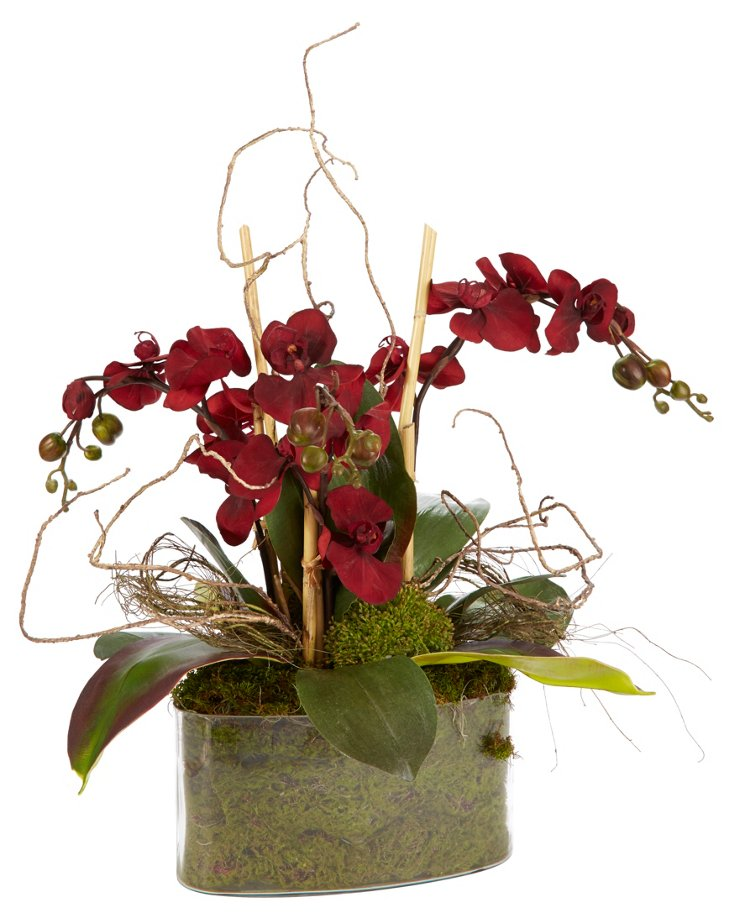 """24"""" Orchids in Oval Pot, Burgundy"""