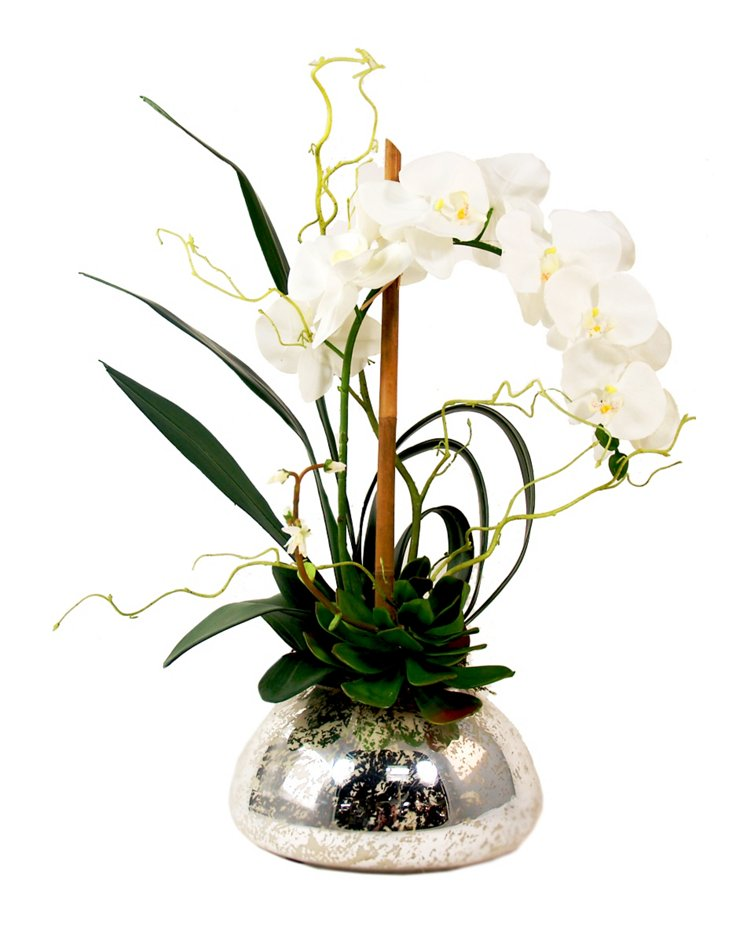 "27"" Phalaenopsis & Cactus, Faux"