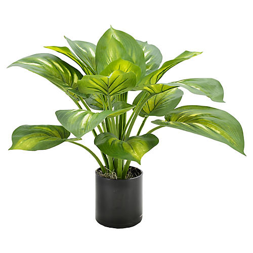 "20"" Hosta Plant in Planter, Faux"
