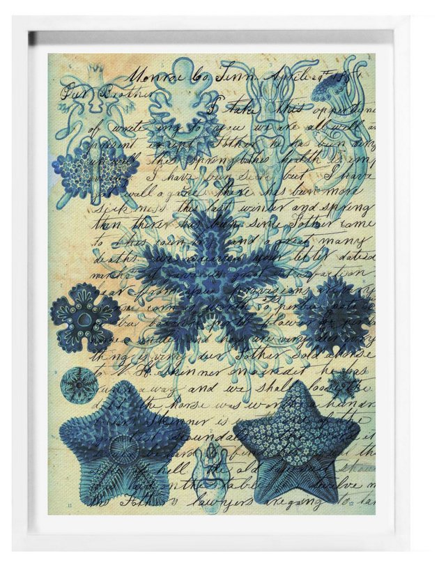 Oliver Gal, Starfish in Blue
