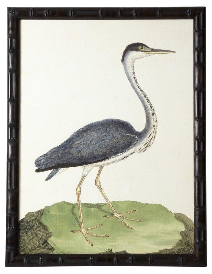Framed Blue Heron Engraving