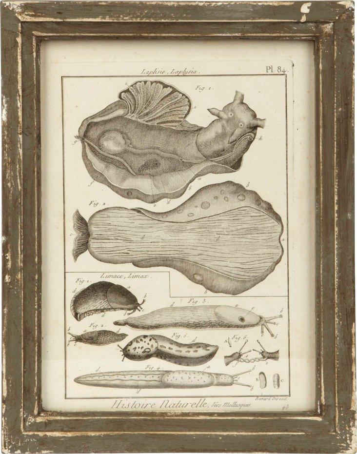 Laplisie Nature Print