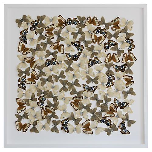 Butterfly Cutouts: Field Colors, Dawn Wolfe