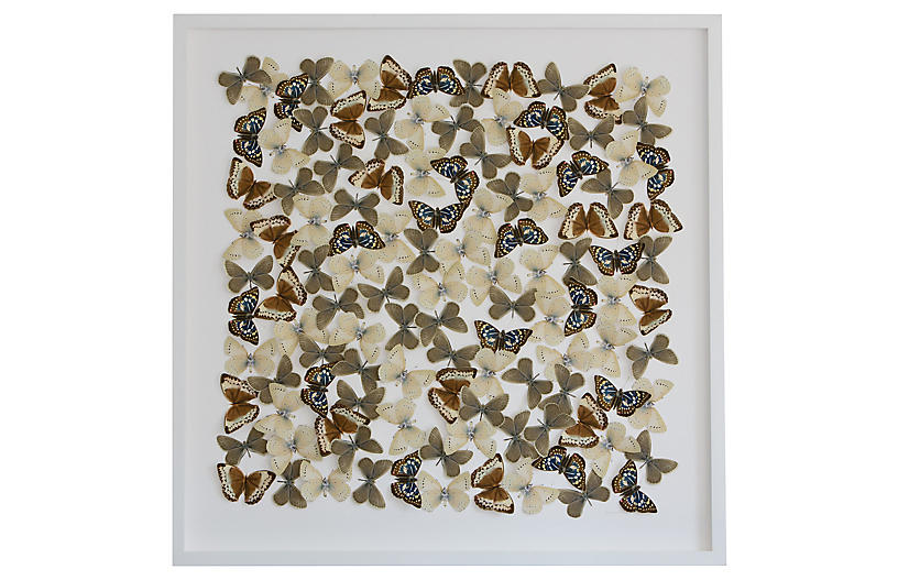 Dawn Wolfe, Butterfly Cutouts: Field Colors