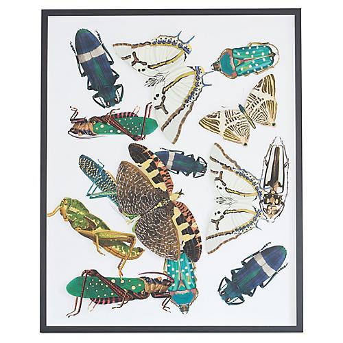 Dawn Wolfe, Dimensional Moths & Bugs