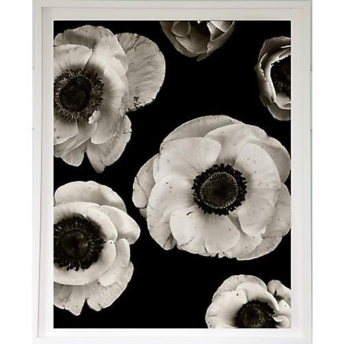 Dawn Wolfe, Anemones on Black