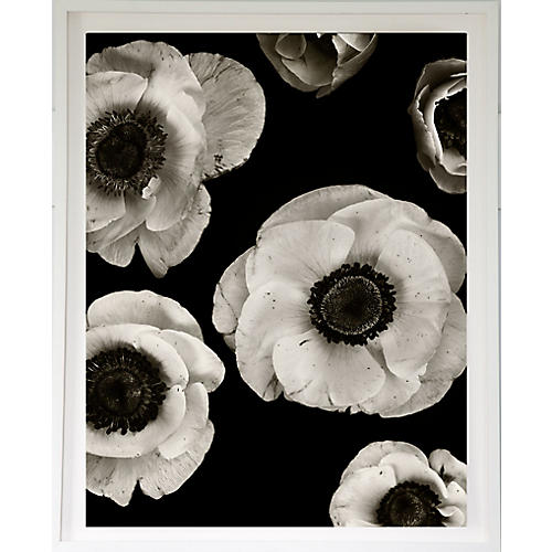 Dawn Wolfe, Anemones on Black