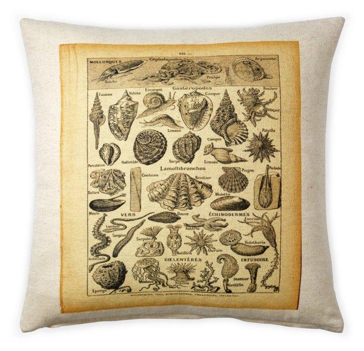 Shell Chart 20x20 Cotton Pillow, Cream