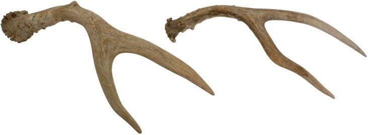 Small Deer Antlers, Pair