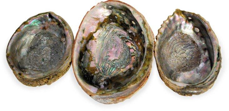 Abalone Shells, Set of 3