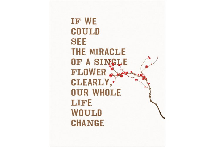 Miracle of a Flower