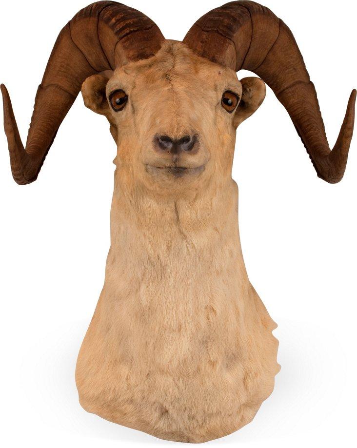 Dahl Ram Head I