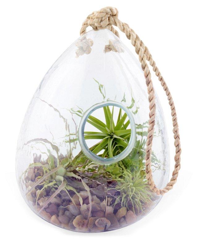 """6"""" Hanging Glass Terrarium, Live"""