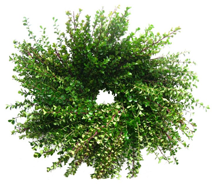 "18"" Boxwood Wreath, Dried"