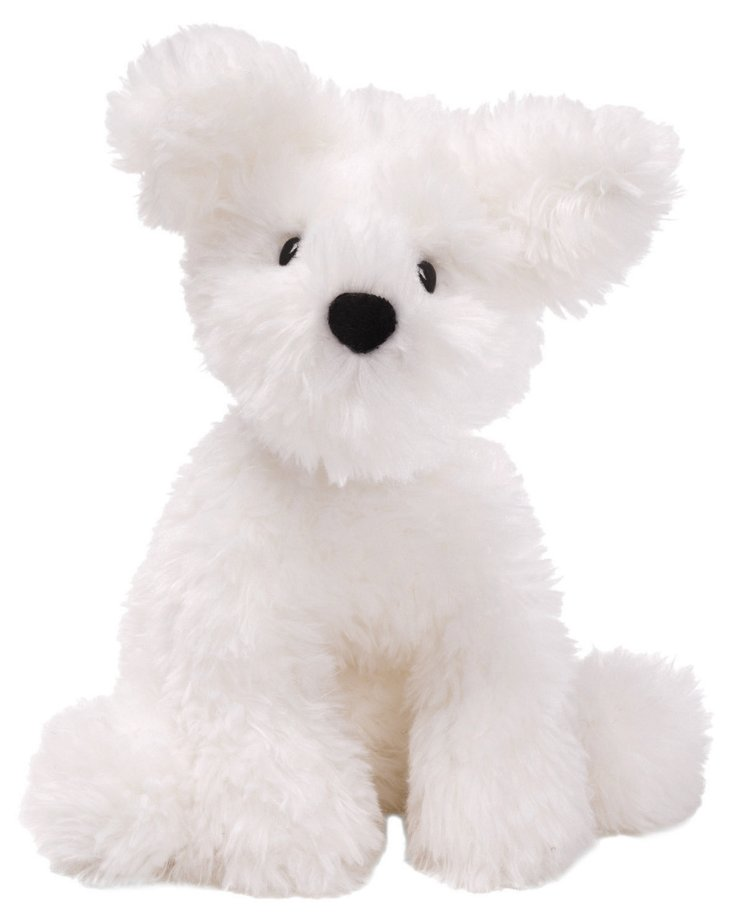 Schnoodle Dog, White