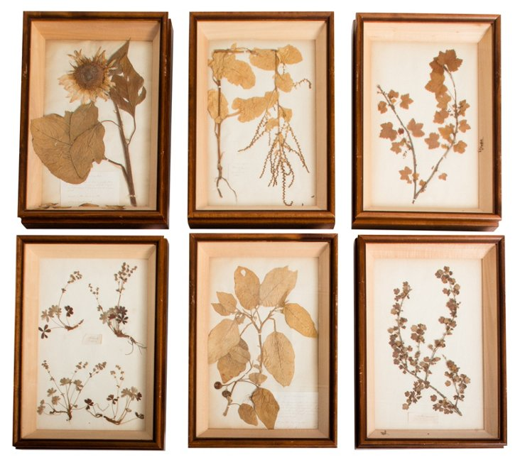 Boxed Pressed Flowers, Set of 6