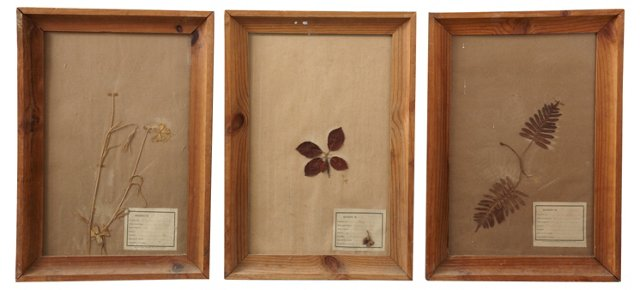Antique French Botanicals, Set of 3