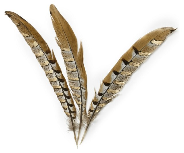 S/6 Pheasant Tail Feathers w/ Gold