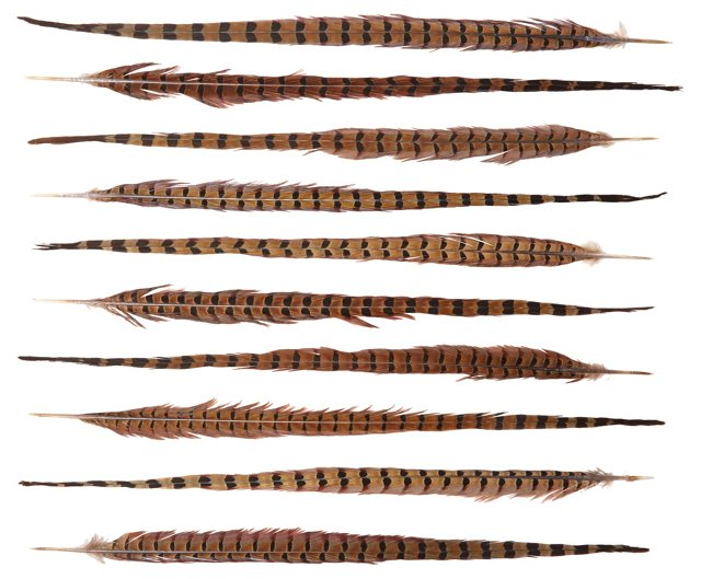 S/10 Ringneck Tail Feathers