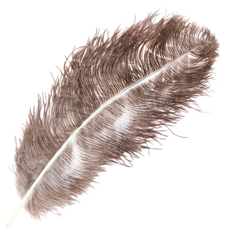 S/10 Ostrich Classic Feathers, Brown