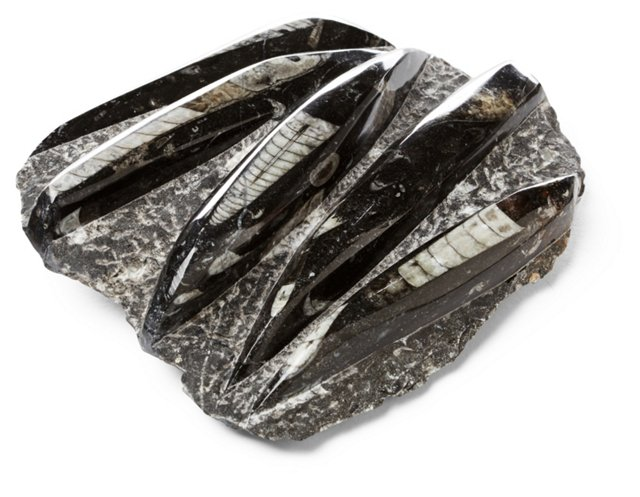 Orthoceras Fossil Paperweight