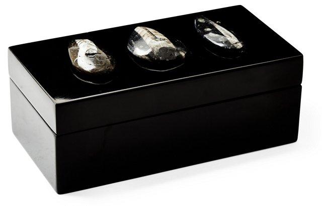Medium Black Lacquer Box w/ Orthocera