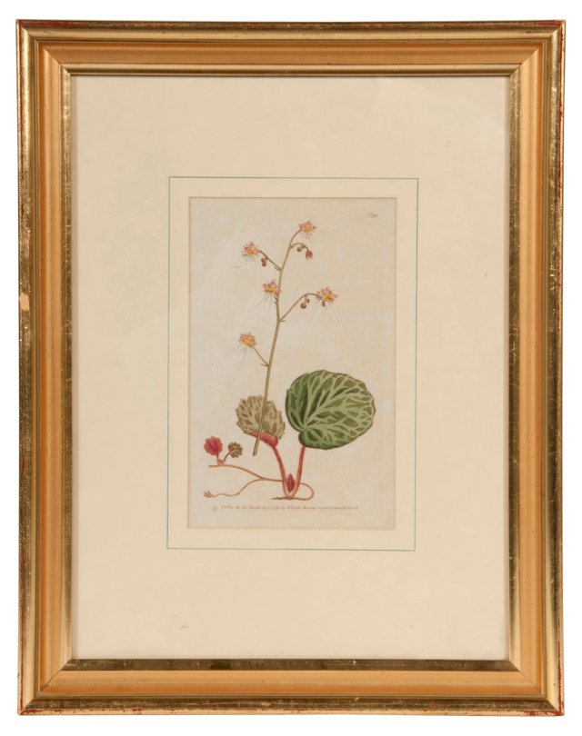 Curtis Flower Print