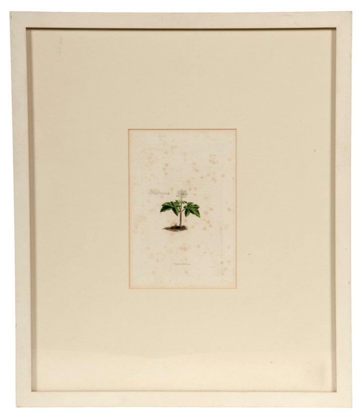 Botanical Print V