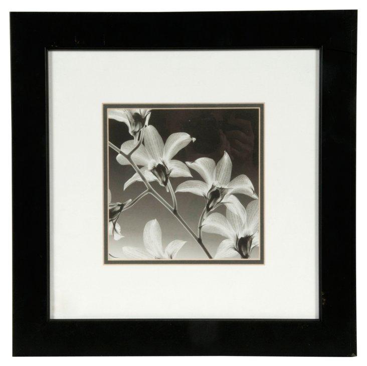 Black & White Flower Print