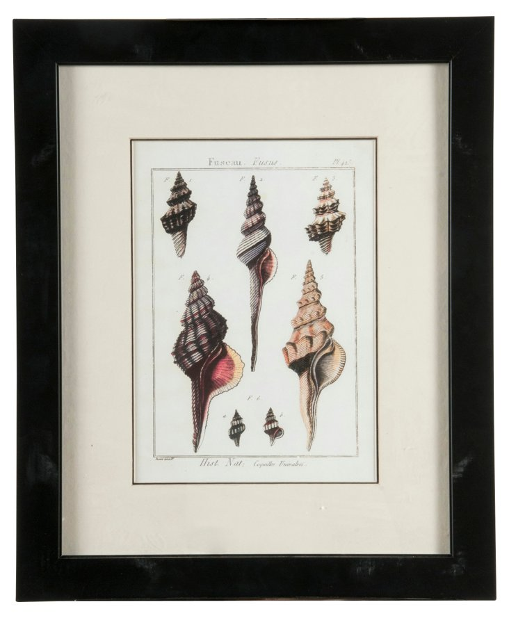 Framed Seashell Print