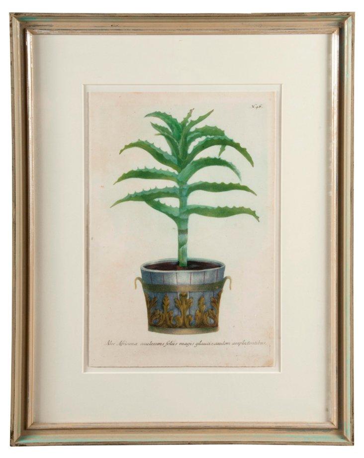 Classical Topiary Print