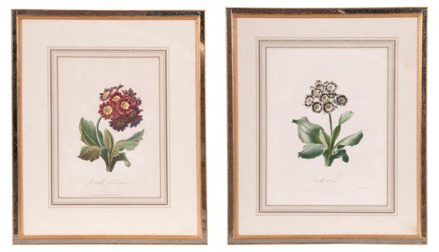 Framed Floral Prints, Set of 2
