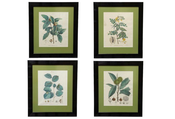 19th-Century Botanical Prints, Set of 4