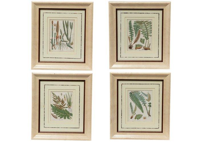 Fern Prints, Set of 4