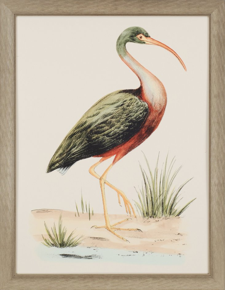 Water Bird I