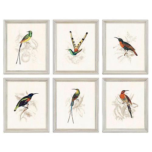 Sir William Jardine, Hummingbirds