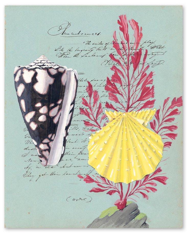 Howard, Yellow Pecten with Red Seaweed