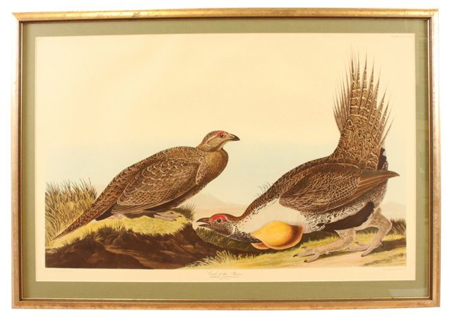 Cock of the Plains, Audubon Leipzig Ed.