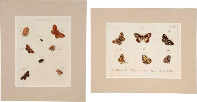 Original Lepidoptera Engravings, Pair