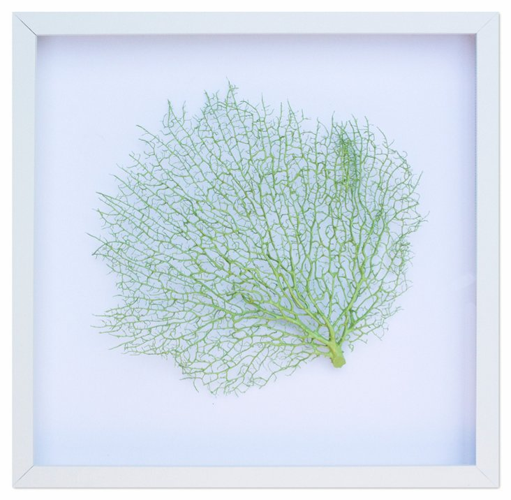 Exotic Sea Fan, Key Lime