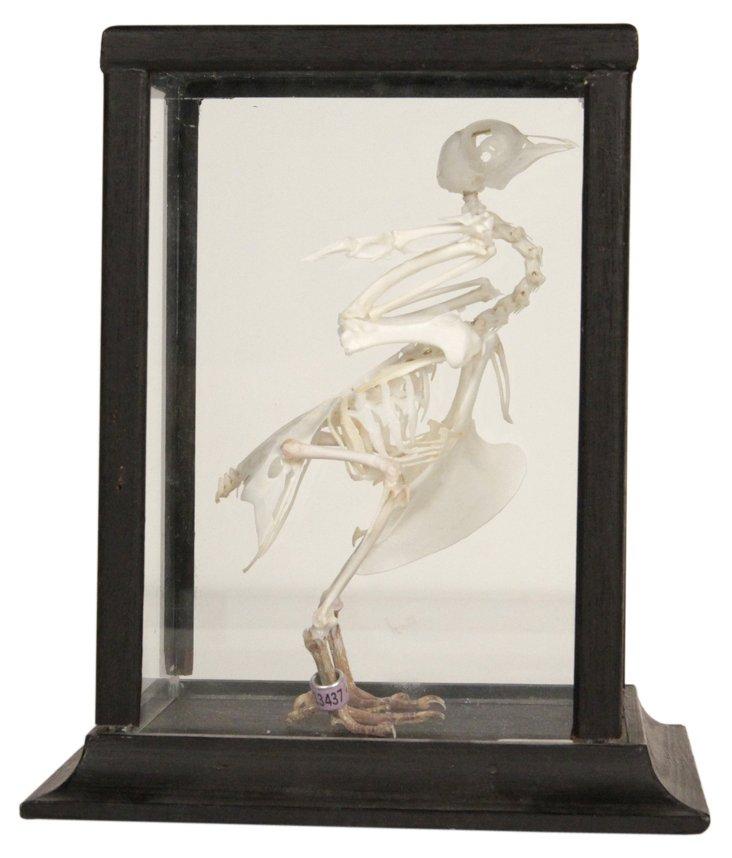 Crested Chicken Skeleton I
