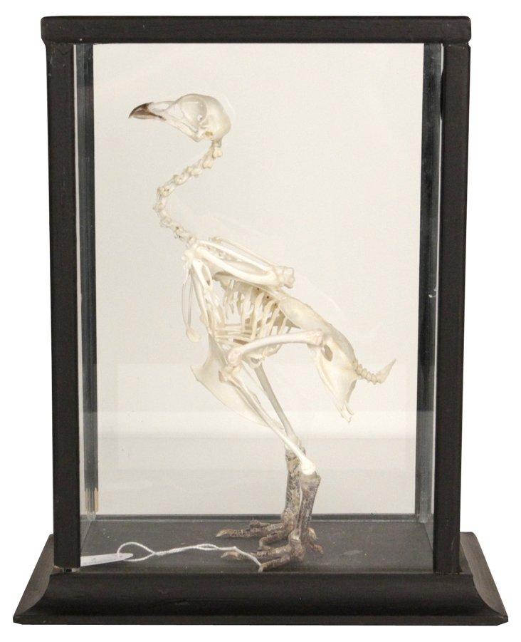 Crested Chicken Skeleton V