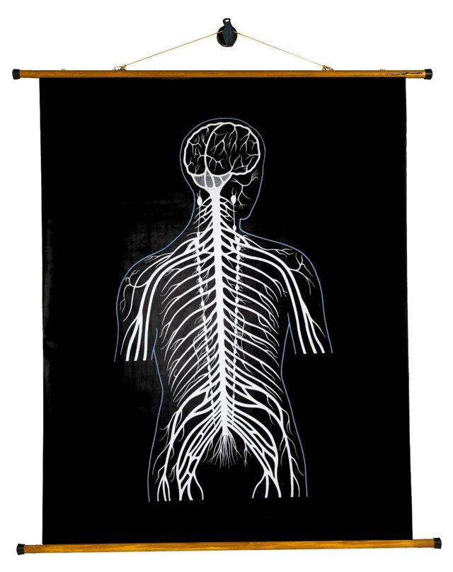 Human Body System Chart